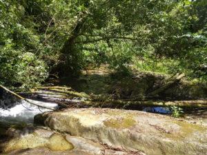 trilha do sapo parque das nascentes